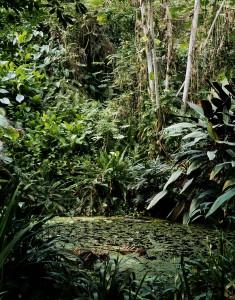 Rainforest. Eden Project, St Austell.2