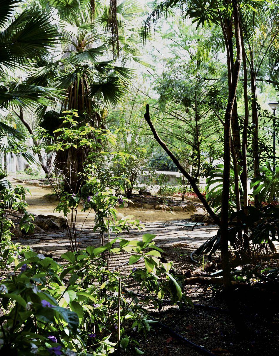 Paisajes m nimos alarc n criado for Jardin americano sevilla