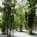 Minimal Landscapes. Bamboo. L.A.C., Frankfurt , 2007-2010. Silicon C-Type print below methacrylate, 153x120 cm. Ed. 3+1 AP
