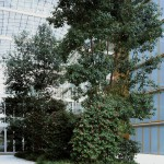 Minimal Landscapes. Camellia. L.A.C., Frankfurt , 2007-2010. Silicon C-Type print below methacrylate, 153x120 cm. Ed. 3+1 AP
