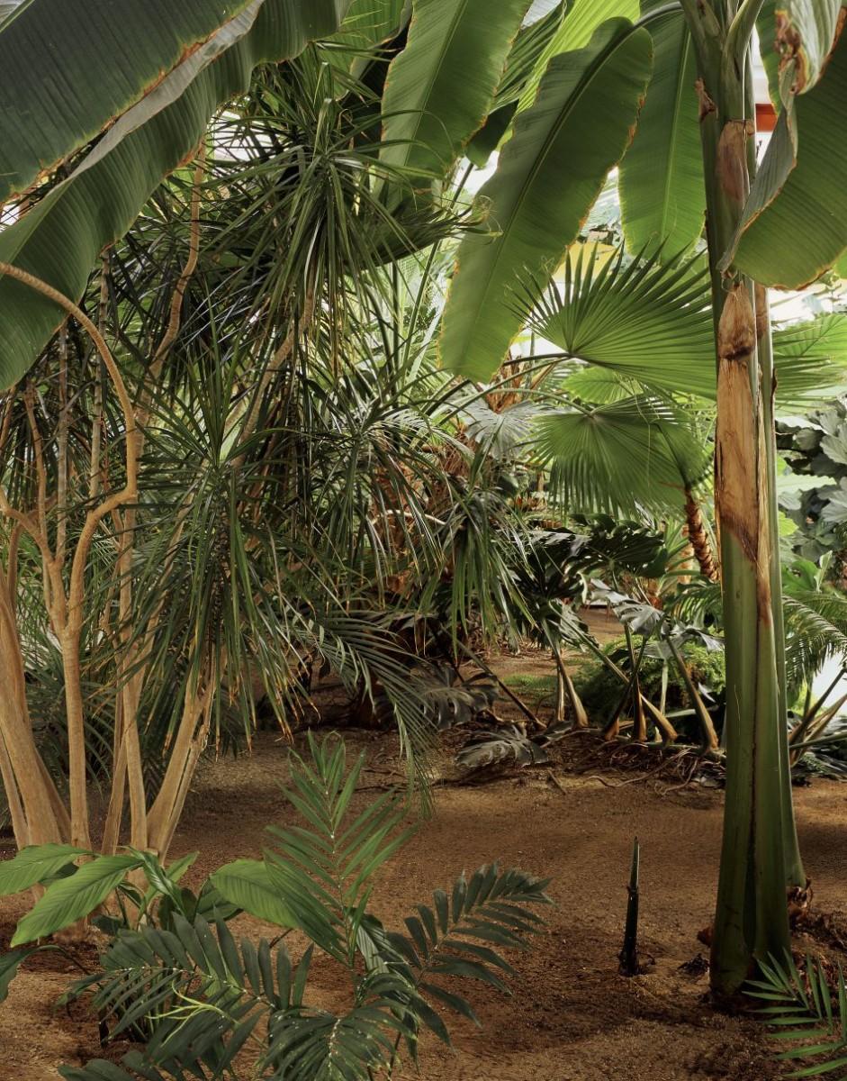 Garden-Atrium.-Hotel-Barcelo-Sevilla.