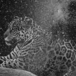 Que muera conmigo el misterio que está escrito en los tigres, 2016. Gelatine silverprint remastered negative, 30x48 cm. Ed.5 + 2 PA