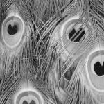 Que muera conmigo el misterio que está escrito en los tigres, 2016. Gelatine silverprint remastered negative, 25x37cm. Ed.5 + 2 AP