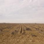 La Mancha #5, 2009. Archival pigment print on cotton paper,116x146 cm. Ed. 5+2 AP