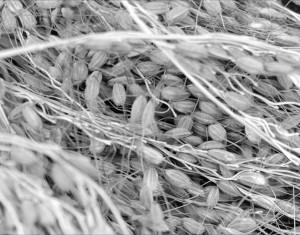 seeds-01